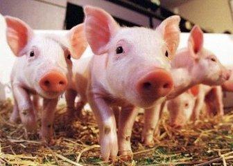 司机按喇叭吓致母猪流产被扣车索赔 法律咨询:涉嫌敲诈勒索